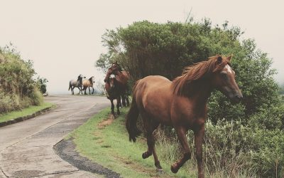 How PEMF Devices For Horses Work