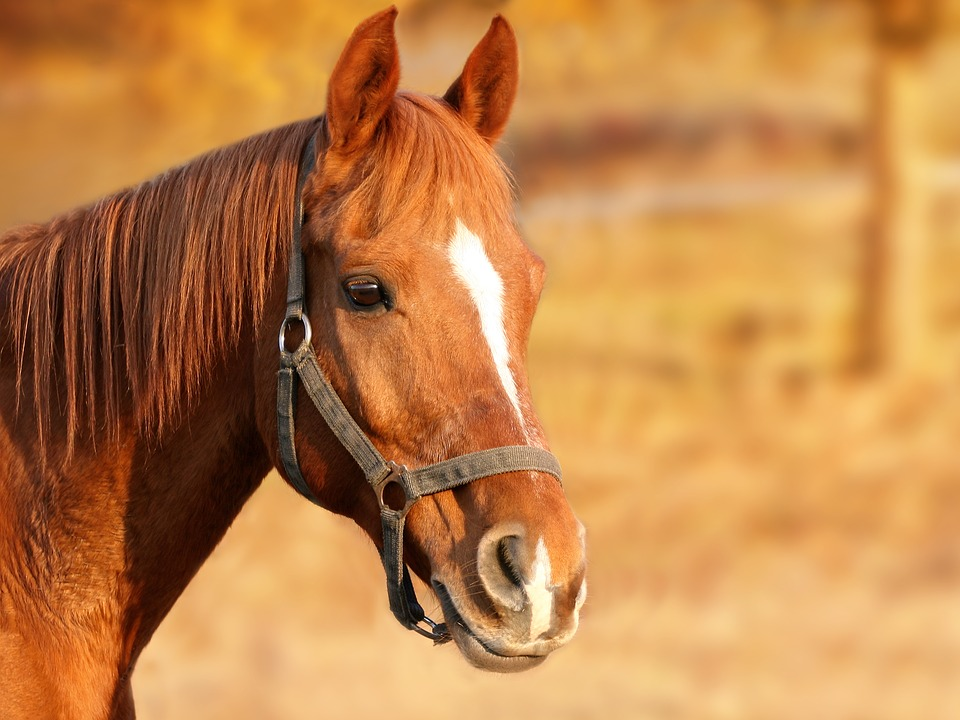 Why PEMF Equine Therapy Is a Great Choice for a Healthy Horse